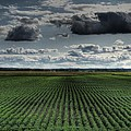 Soy Beans by Jane Linders