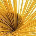 Spaghetti Spiral by Julian Eales