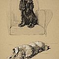 Spaniel And Sealyham, 1930 by Cecil Charles Windsor Aldin