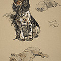 Spaniel, Pekinese And Chow, 1930 by Cecil Charles Windsor Aldin