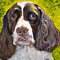 Spaniel The Eyes Have It by Susan A Becker