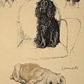 Spaniels, 1930, Illustrations by Cecil Charles Windsor Aldin