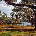 Spanish Moss On The Bon Secour River Wide Angle by Michael Thomas
