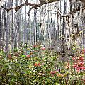 Spanish Moss by Susan Cole Kelly