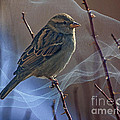 Sparrow In A Weave by Janice Pariza