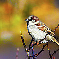 Sparrow In The Park by Artistic Photos
