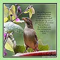 Sparrow Inspiration From The Book Of Luke by Catherine Sherman