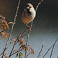 Sparrow On A Twig by Tom Janca