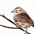 Sparrow by Parappurathu Mathews