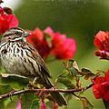 Sparrow Song 8 by Fraida Gutovich