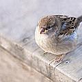 Sparrow - Takeoff Problems by Alexander Senin
