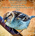 Sparrow With Verse And Painted Effect by Debbie Portwood