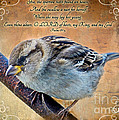 Sparrow With Verse by Debbie Portwood