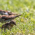 Sparrows by Gaurav Singh