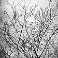 Sparrows by Iliyana Lazarova