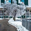 Spartan Stadium by Sheri Bartoszek