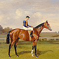 Spearmint Winner Of The 1906 Derby by Emil Adam