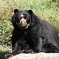 Speckled Bear by John Telfer