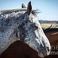 Speckled Gray by M Dale