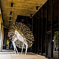 Spectacular Plumage by Angus Hooper Iii