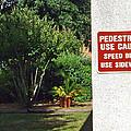 Speed Bumps Use Sidewalks by Marian Bell
