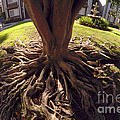 Spherical Rooting by Clayton Bruster