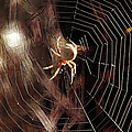 Spider - Building A Ferris Wheel by Ericamaxine Price