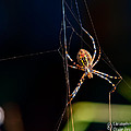 Spider by Christopher Holmes