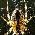 Got Flies? by Tracy Knauer
