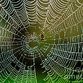 Spider In Web 3 by Tracy Knauer