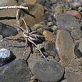 Spider by Katerina Naumenko