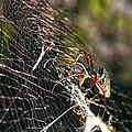 Spider by Mitch Cat