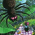 Spider Picnic by Martin Davey