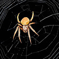 Spider by Savannah Gibbs