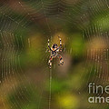 Spider Web by Beth Sargent