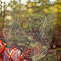 Spider Web by Edward Fielding