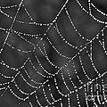 Spider Web by Jeannette Hunt