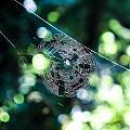 Spider Web by Marie  Cardona