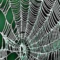 Spider Web Rancho Oso Santa Barbara California by Bob and Nadine Johnston
