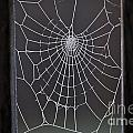 Spider Web With Frost by Jim Corwin