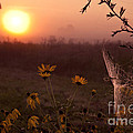 Spiderweb And Wildflowers Lit By Morning Sunrise by Brandon Alms