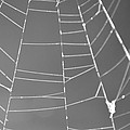 Spiderweb Bw by Brent Dolliver