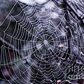 Spiderweb by K Hines