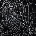 Spiderweb With Dew by Elena Elisseeva