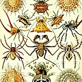 Spin Arachnids Insect Haeckel Arachnida Araneae by Movie Poster Prints