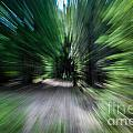 Spinning Through The Woods by Grace Grogan