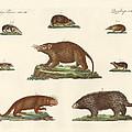 Spiny Animals by Splendid Art Prints