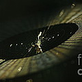 Spiny Orb Weaver by Kitrina Arbuckle