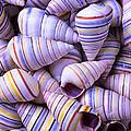 Spiral Sea Shells by Garry Gay