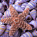 Spiral Shells And Starfish by Garry Gay